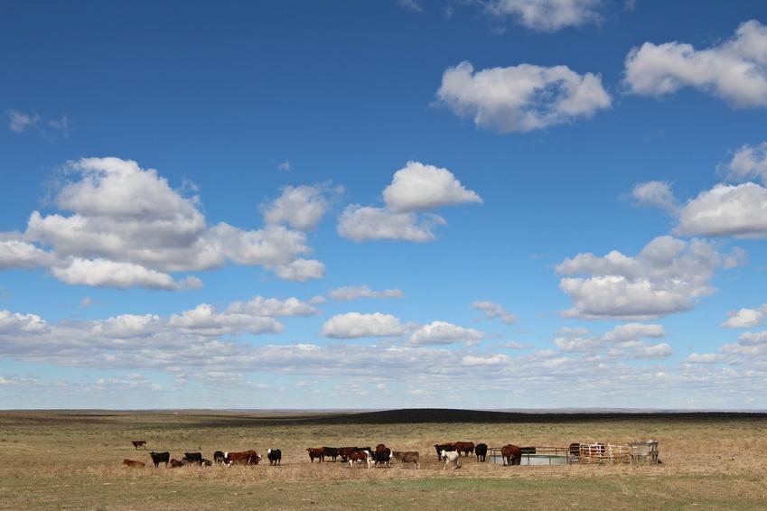 US-Shortloin Wingsteak  - Artgerechte Tierhaltung im mittleren Westen der USA